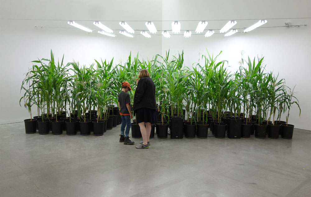 Martin Roth – I grew corn for a plant concert