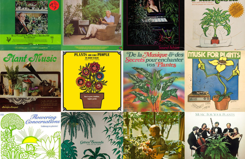 Botanical Rhythms: A Field Guide to Plant Music